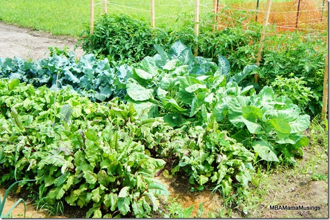 Beets, Broccoli, and Tomato plants in a garden