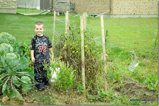 Boy standing with tomato plants