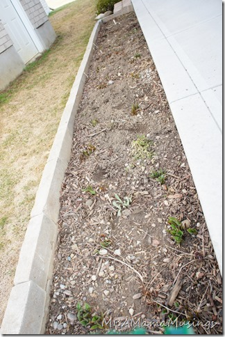 Raised Rocky Shaded Flower Bed