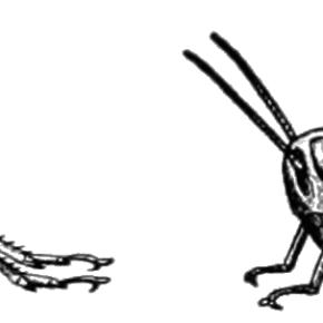 Consider the Grasshopper