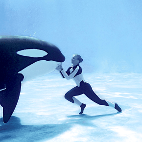 Swimming with Killer Whales, and Cars that Go Up, Up, Up