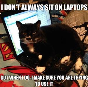cat sitting on a laptop meme