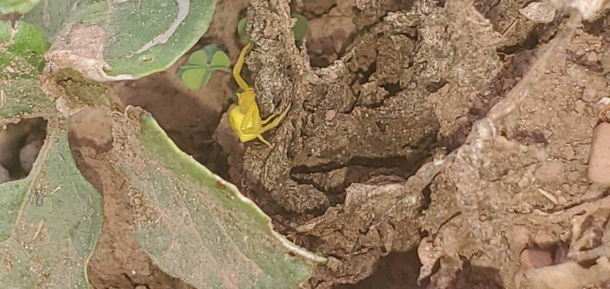 spider on cucumber plant photo