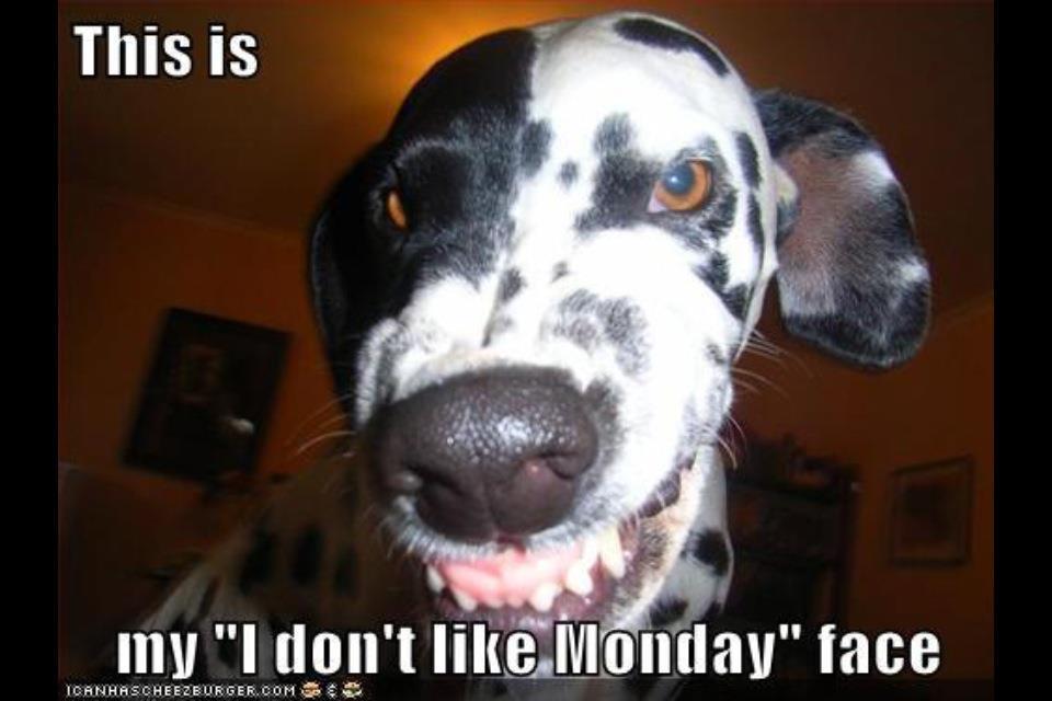 Monday Cute Dogs Michael Bradley Time Traveler