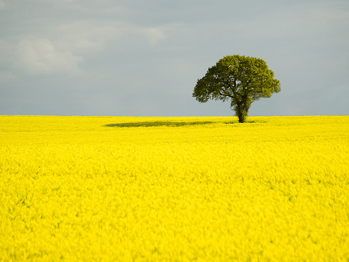 treeinfield