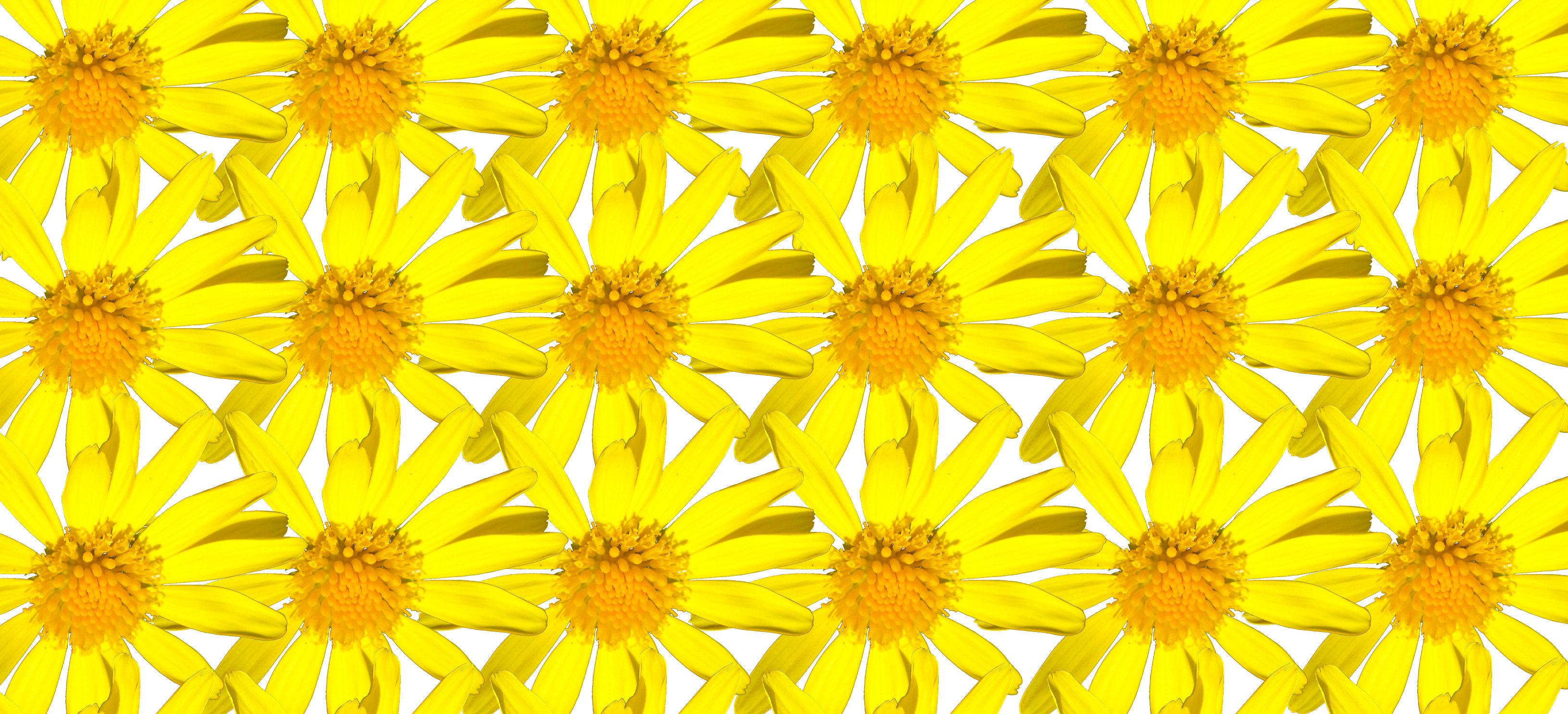 repeating daisies