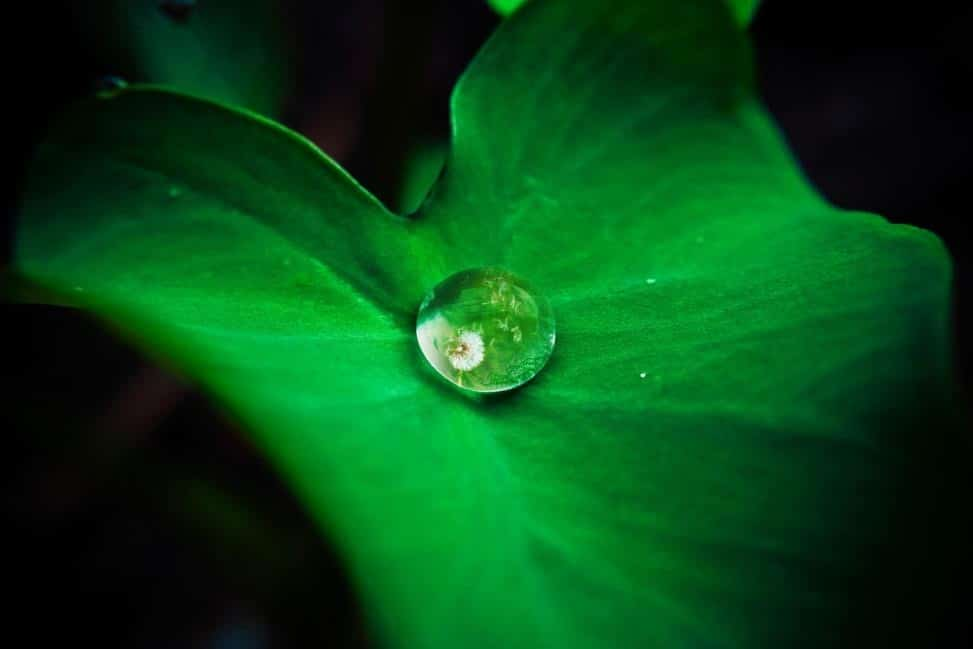 Drop of water on a leaf