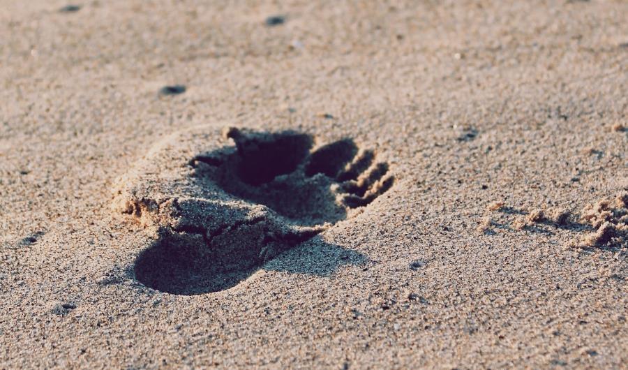 footprint in the sand walking away