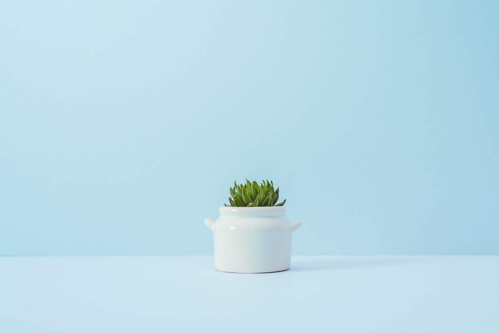 small plant on a blue background