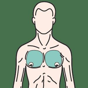胸部(乳輪除く)