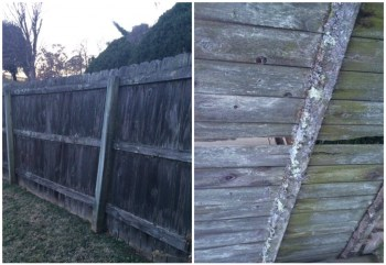 Scoggins Old Fence