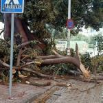 MC reclama un programa específico para árboles de gran porte
