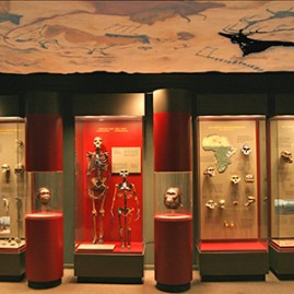 EXHIBITS_HumanOriginsExhibit