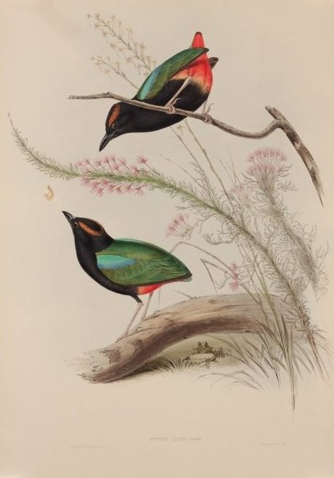 John Gould's Birds of Australia