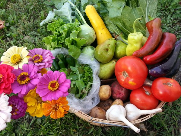 McCollum CSA Summer Share