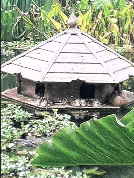 Ducklings on nest box