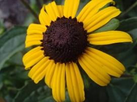 Mc Flower Calendar shots June 19, 2024 4