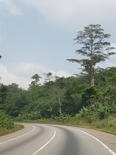 Driving through the forests of Ashanti Region