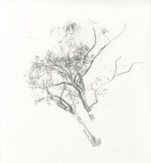 westconnex-coutts_trees-19