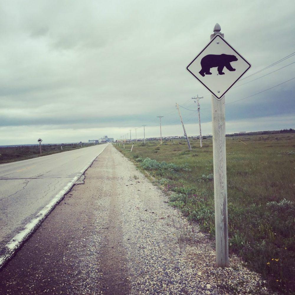 Traverse d'ours polaire à Churchill Manitoba Canada