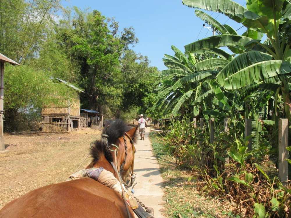 On se déplace en charrette sur l'île de Koh Trong au Cambodge