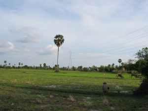 Champ Cambodge