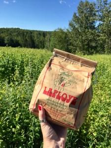 Farine de buckwheat La Ploye