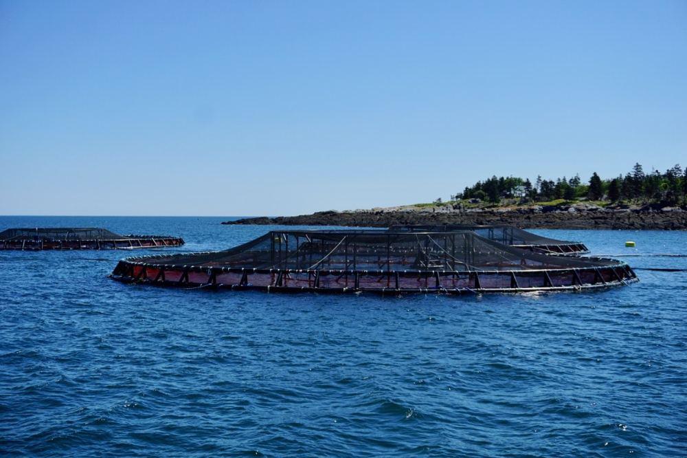 Cage à saumons Grand Manan Nouveau-Brunswick