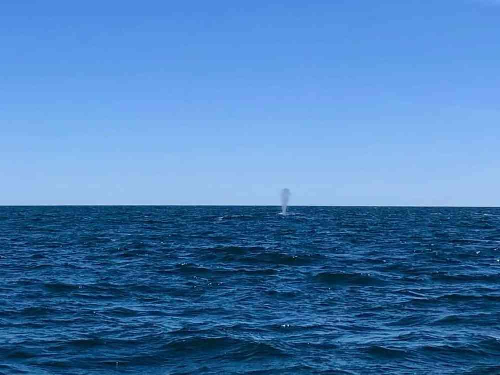Croisière aux baleines à Percé en Gaspésie, Québec