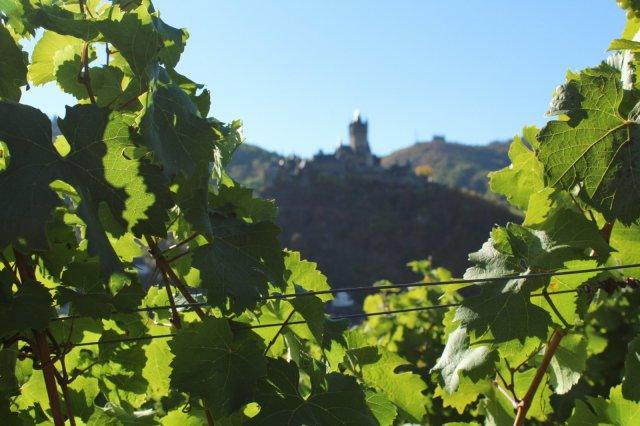 Cochem vineyard