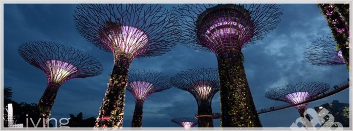 Singapore's Super Trees by travel photographer Heather McKay
