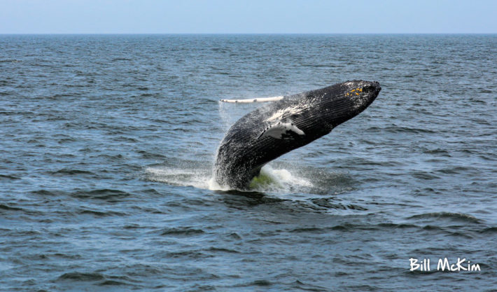 Jersey shore whale watch photography August 2019 photo off Long Branch New Jersey