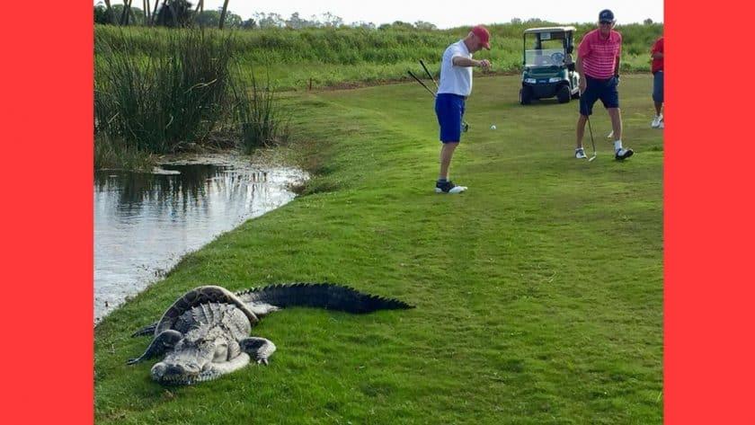 Alligator Fights Python