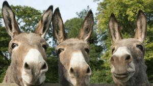 Donkey Races !!!!