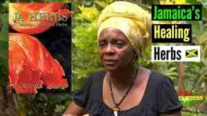 Healing Herbs Growing wild in Jamaica