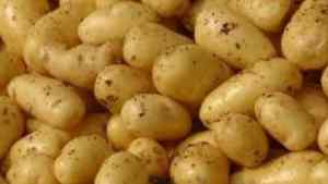 $50m Provided For National Irish Potato Programme