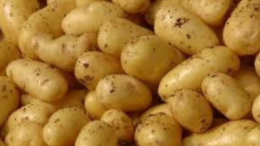 National Irish Potato Programme