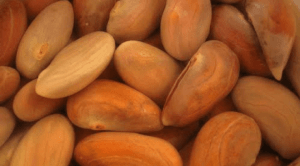 """""""A Healthy You"""" by Amber Crowl – The Health Benefits of  Jackfruit Seeds"""
