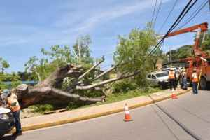 Iconic Montego Bay Tree Fell Causing Major Power Outage – Omen?