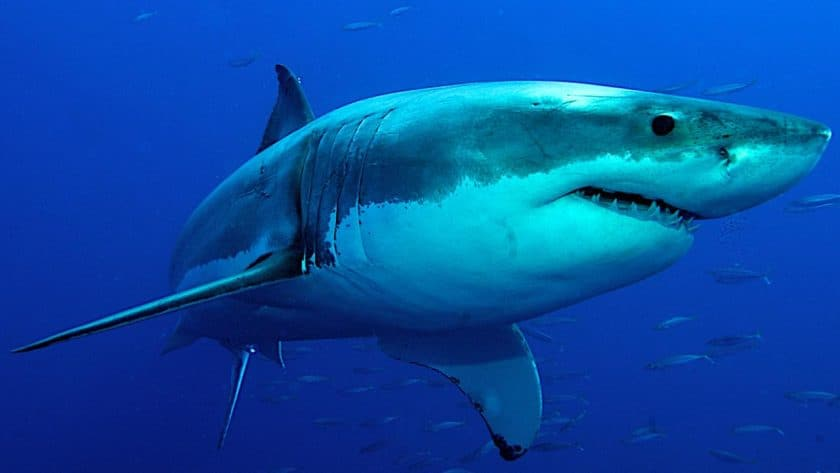 Woman Hospitalized Following Shark Attack