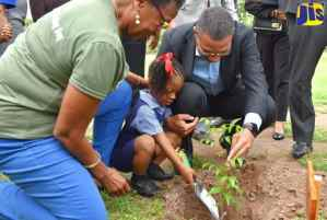 Three Million Trees to be Planted Over Three Years