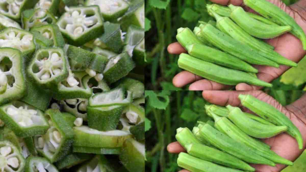 Here's What Happens To Your Body When You Eat Okra!