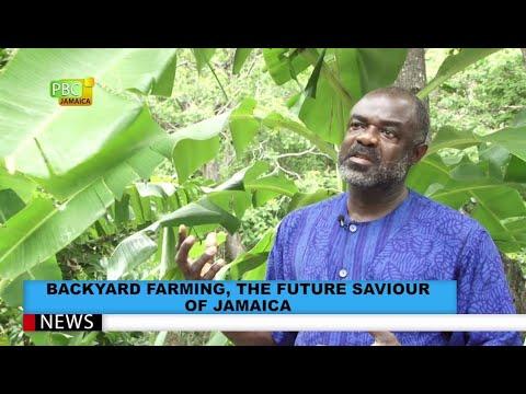 Backyard Farming, The Panacea To Food Security In Jamaica