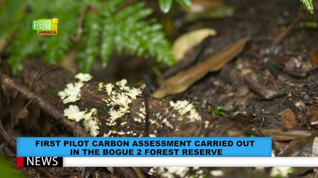 Pilot Carbon Assessment Carried Out In Bogue 2 Forest