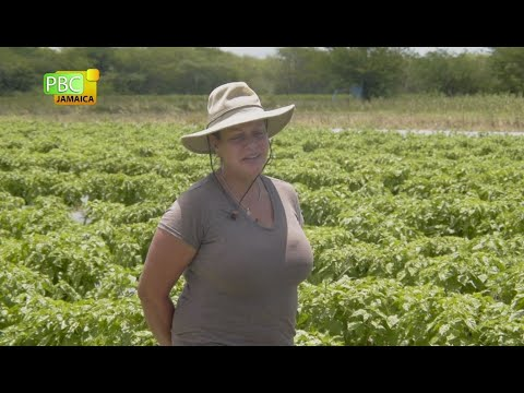 The Business Of Food: Liz Levy In The Field