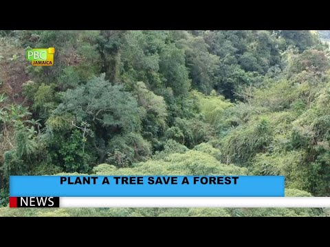 Plant A Tree Save A Forest