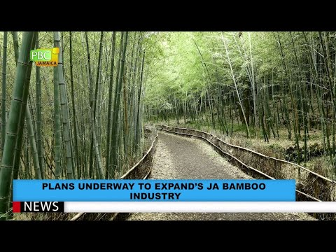 Plans Underway To Expand JA's Bamboo Industry