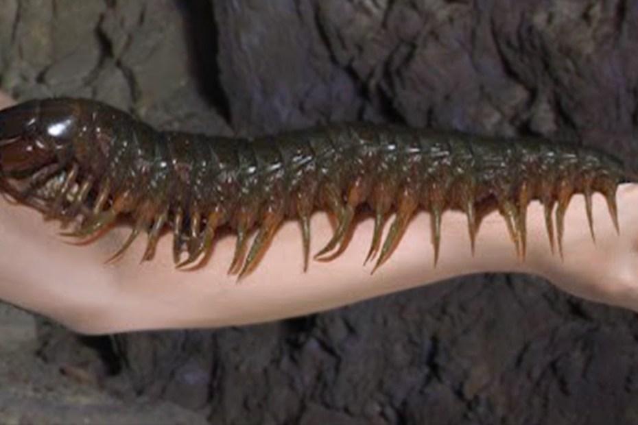 15 Deadliest Monsters of The Amazon