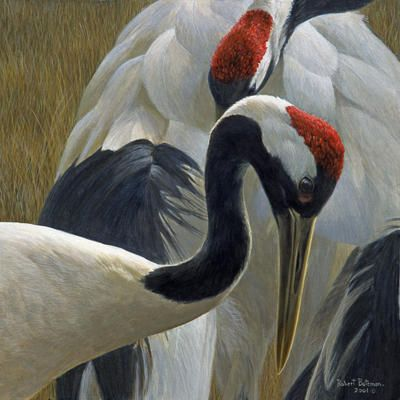 The Art Of Robert Bateman McMichael Canadian Art Collection