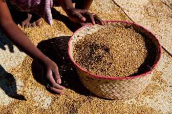 1-riz-madagascar-45620
